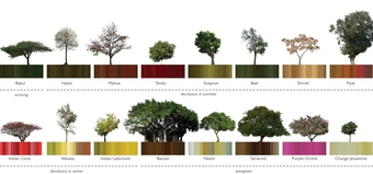 Tree locations on the site determine colour configurations of all building louvers